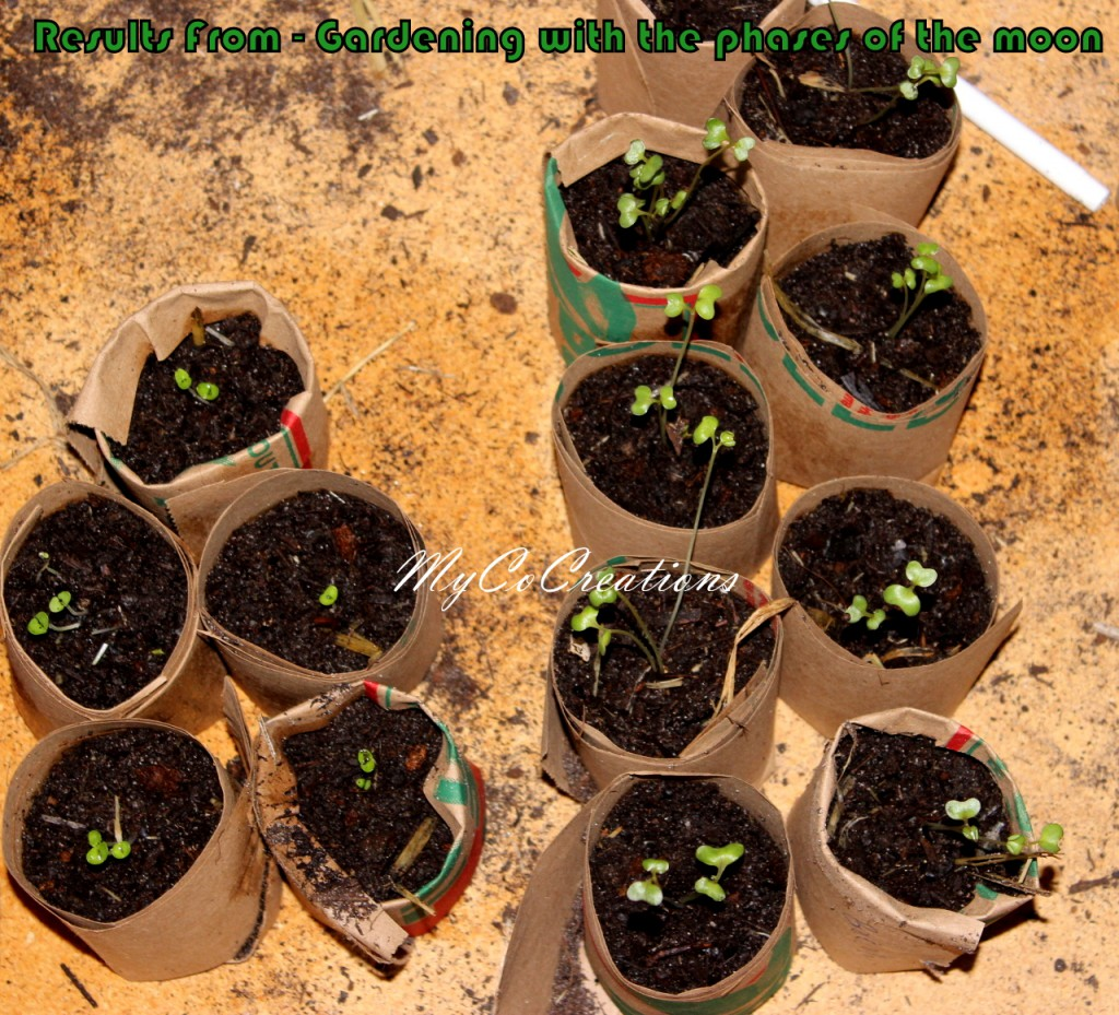 GardeningPhases