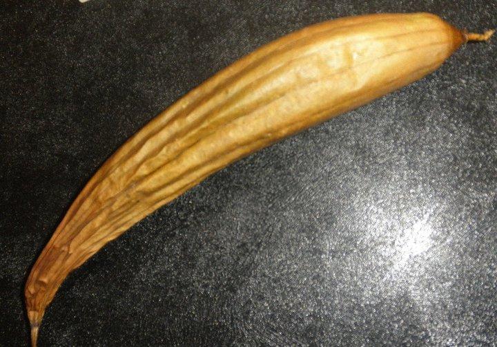 MyCoCreations Plant Based Luffa Sponge Luffa Gourd Drying